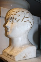 Phrenology china bust